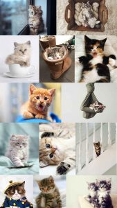 Montage of cute cat pictures