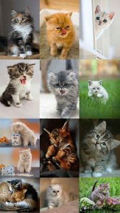 Montage of cute cats