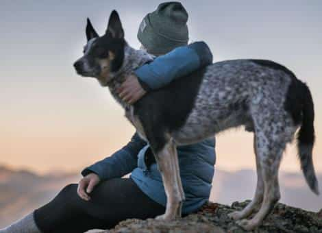 person sitting with left arm round large dogs' neck