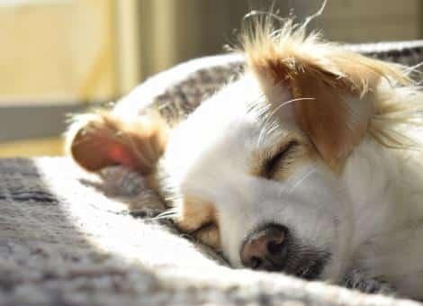 dogs face asleep laying on cushion