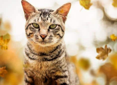 tabby cat with green eyes looking at the camera with leaves in backgroun