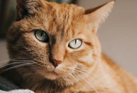 close up of ginger cat