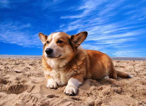 dog lying on sand with blue sky