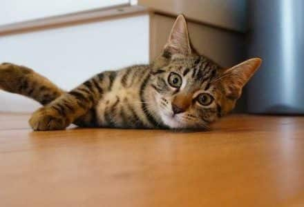 kitten playing on the floor