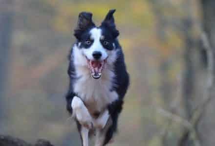 autumn dog running