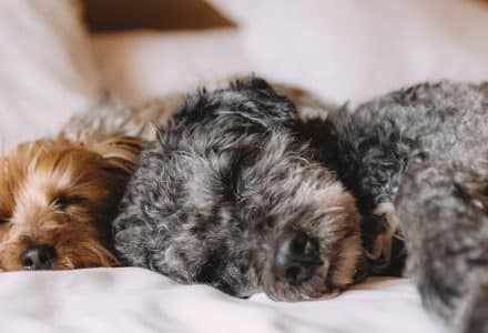 two dogs asleep on the bed