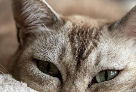 cat lying down in blanket