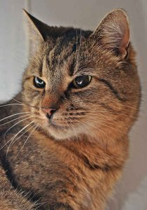 Cat looking over shoulder
