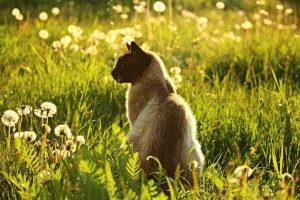 cat in long grass in sunshine