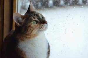 tabby cat looking out of window with rain on