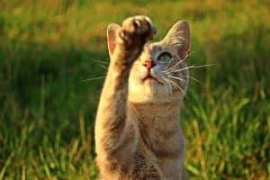cat reaching up