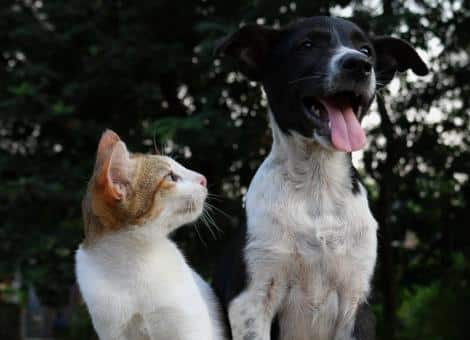 cat and dog in garden