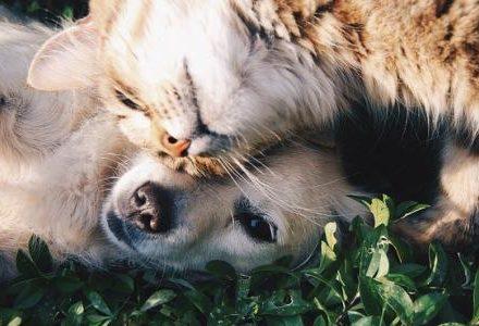 closeup dog and cat hugging