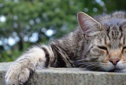 cat sleeping on a slab