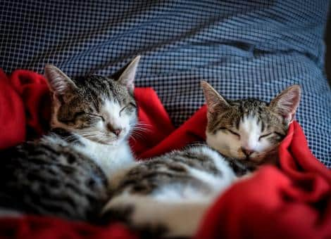 2 cats lying asleep on red blacket
