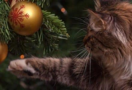 cat looking at baubles on Christmas tree