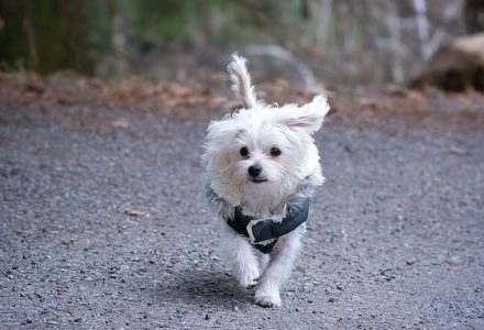 small dog running in woods
