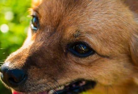 dog closeup in the garden