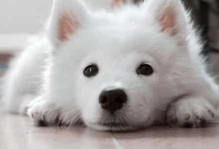 dog lying down close up