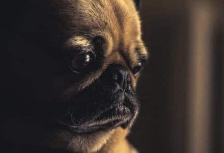 dog staring in a dark room