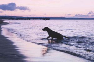 dog climbing out of sea