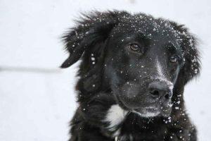 dog in snow - Pet Health Hazards