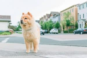 small dog standing on street of houses