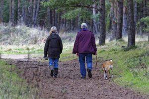elderly couple walking dog