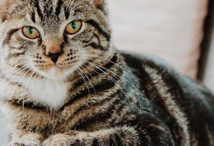 cat on an armchair