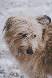 long haired dog in snow