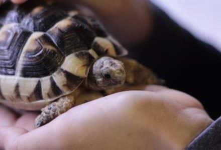 tortoise on palm of hand
