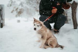 small fluffy dog sitting in the snow with human crouching down holding red lead