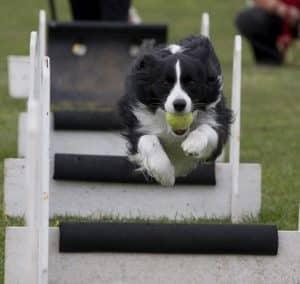 flying dog training