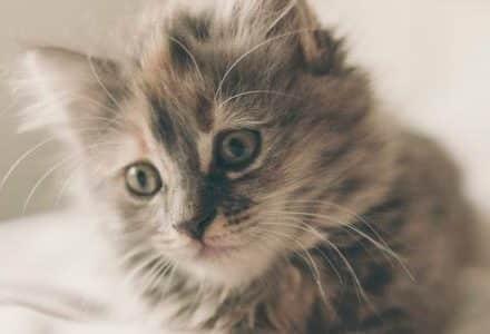cute cat on duver