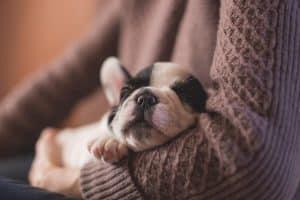 dog snugged asleep on human arm wearing jumper