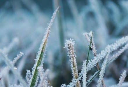 icicle frost on grass