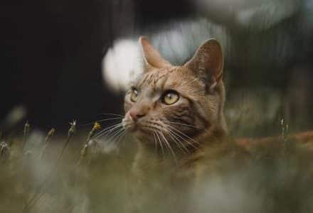 tabby cat in long grass