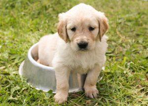 puppy in a dog bowel