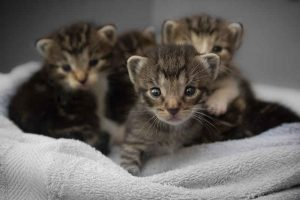 cute kittens on a towel
