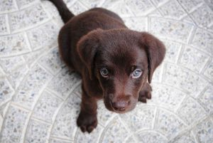 dog puppy looking up on marble floor