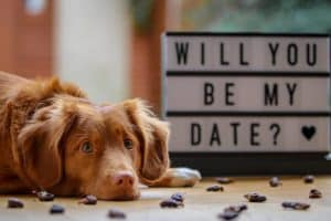 brown dog laying next to sign that reads will you be my date