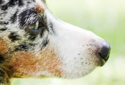 closeup of dog in garden