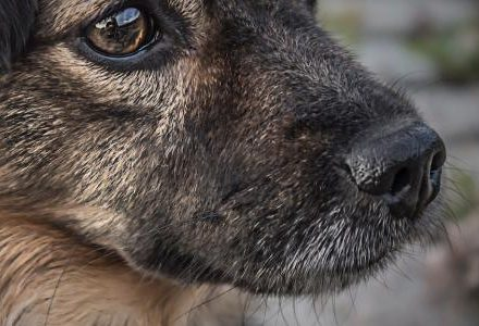 dog closeup