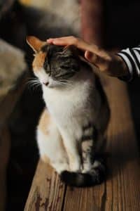 cat sitting on table with human hand stroking head