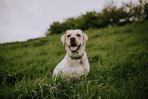 dog sitting in long grass