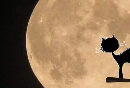 cat illustration on the moon