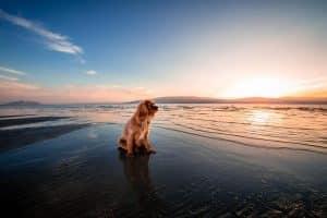 dog sitting on shore of beach at sunrise