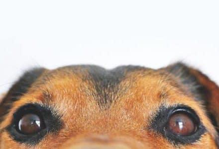 dog eyes closeup