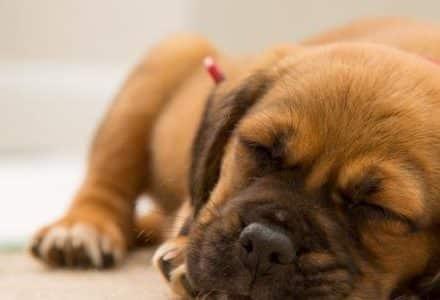 dog sleeping on a carpet