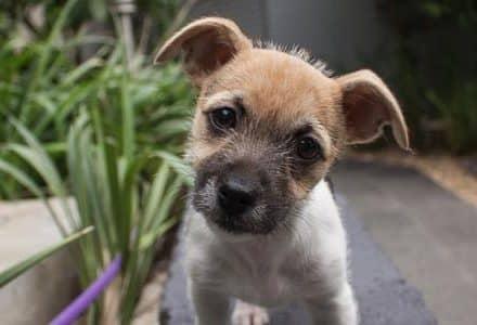 puppy dog in garden